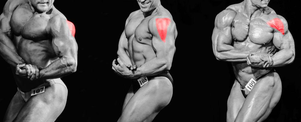 Anatomie der Schulter: 3 Teile des Deltamuskels
