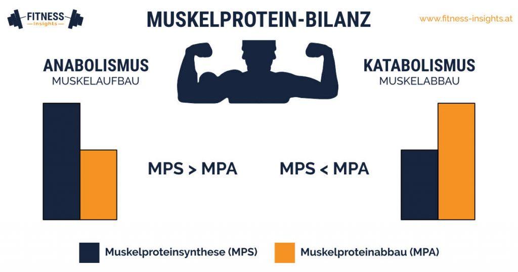 Muskelprotein-Bilanz: Muskelabbau und Muskelaufbau