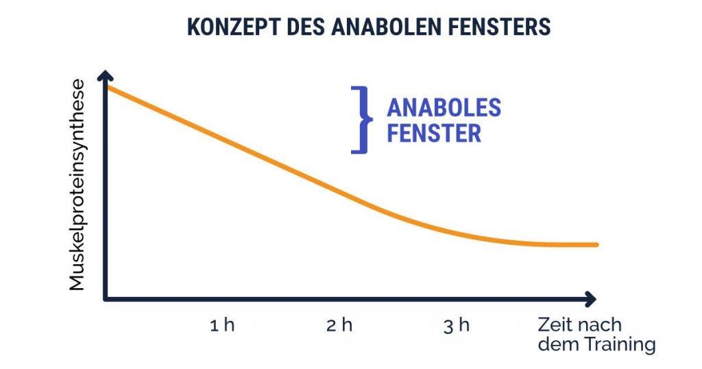 Konzept des anabolen Fensters erklärt; Muskelproteinsynthese