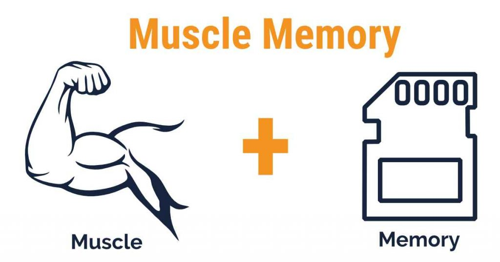 Nach Trainingspause Muscle Memory Effekt nutzen